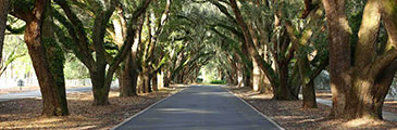 Belfair Plantation Bluffton SC